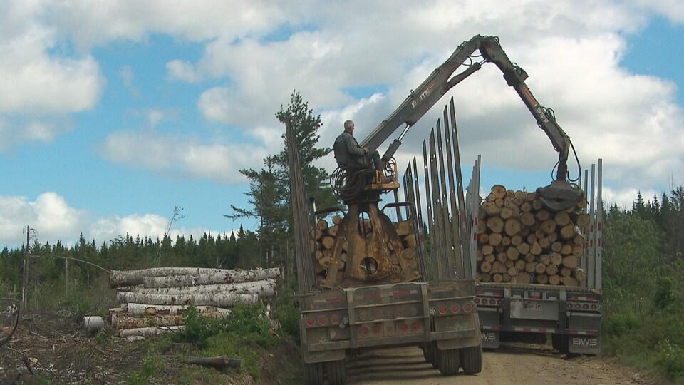 Un travailleur forestier manipule du bois coupé avec de la machinerie lourde.