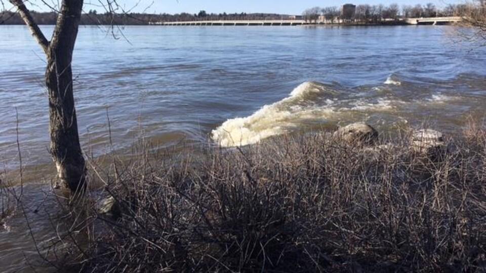 Une vague d'eau frappe un arbre