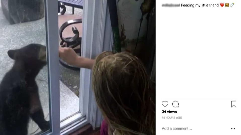 Une fille nourrit un ourson à travers une porte-fenêtre.