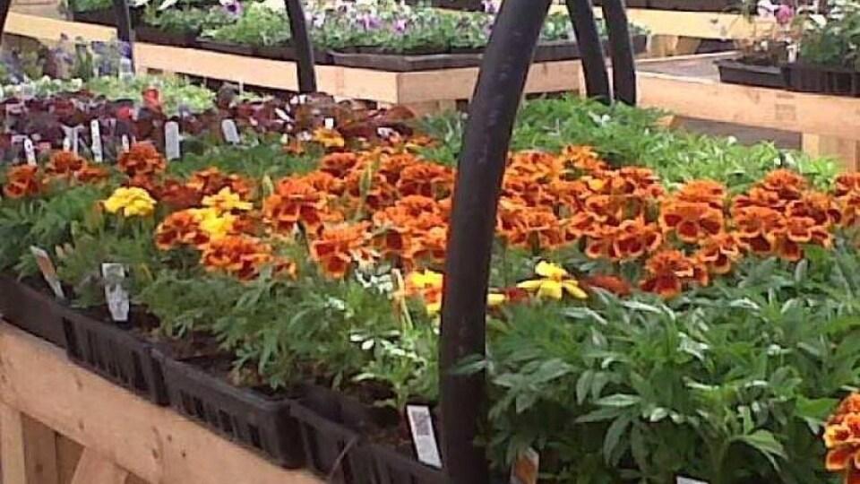 Des plants et  des fleurs sur des tables.