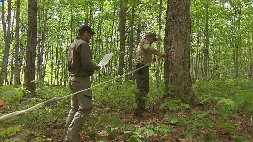 On voit deux hommes de profil qui font des relevés dans une forêt de feuillus.