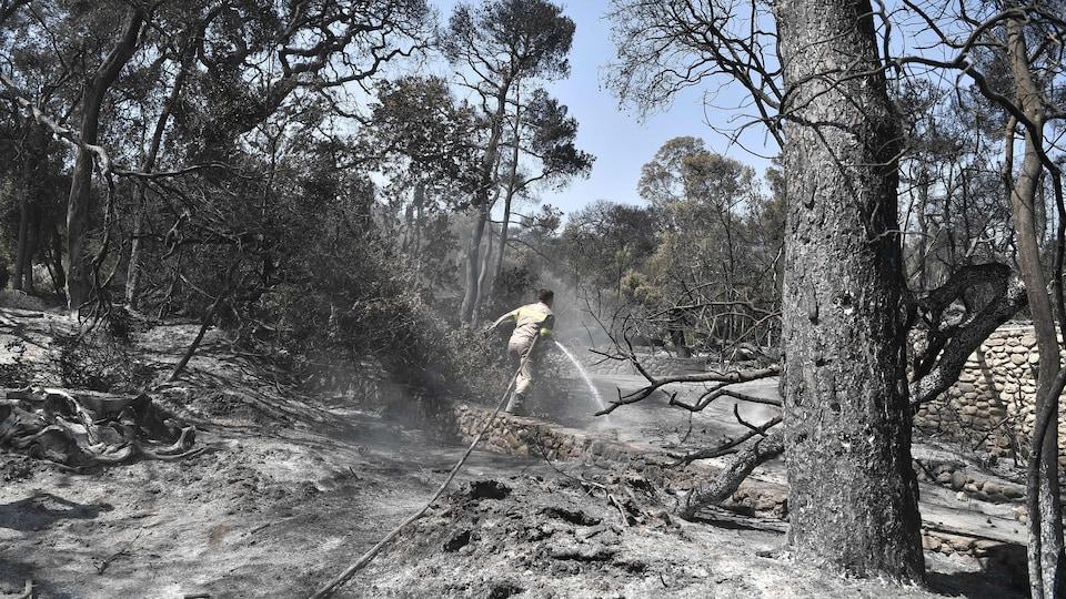 Un pompier avec un tuyau d'arrosage et des arbres calcinés.