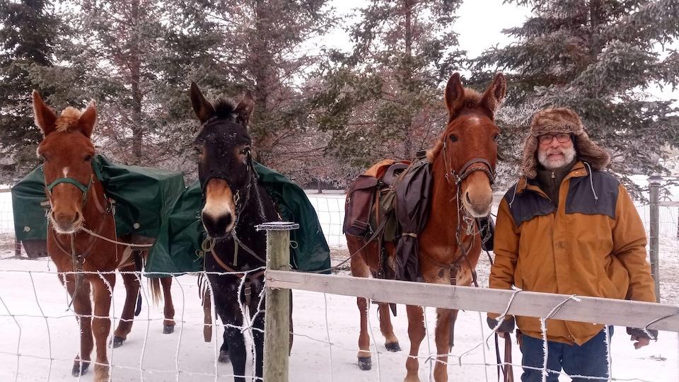 Émile Brager et ses trois mules regardent directement la caméra derrière une clôture.