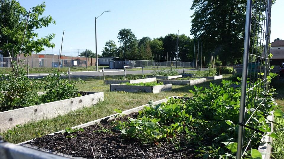 Des carrés de jardin dans lesquels poussent différents légumes.