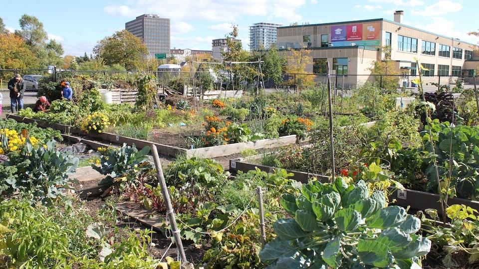 Un jardin communautaire. (archives)