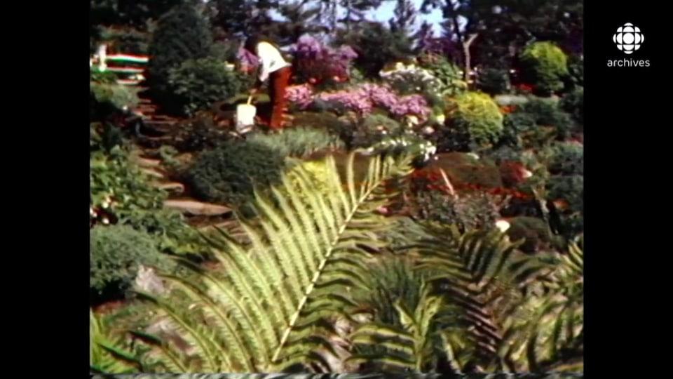 Un jardinier s'occupe des fleurs multicolores aux Jardins de Métis.