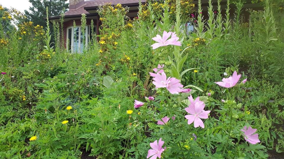 Une multitude de fleurs sauvages à l'avant d'une résidence.