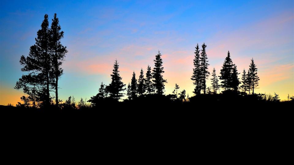 Un coucher du soleil avec l'ombre d'épinettes blanches.