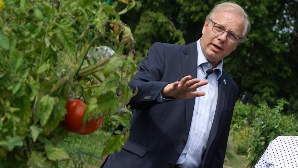 Jean-François Lisée fait le tour d'un jardin communautaire dans le quartier Rosemont, où il a croisé un énorme plant de tomates.