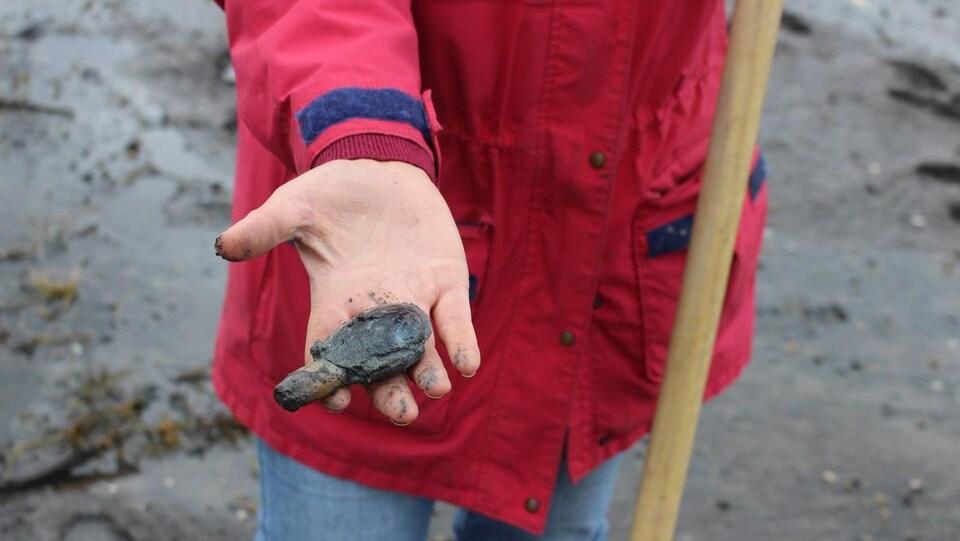 Gros plan sur un mollusque boueux dans la main d'une chercheuse.