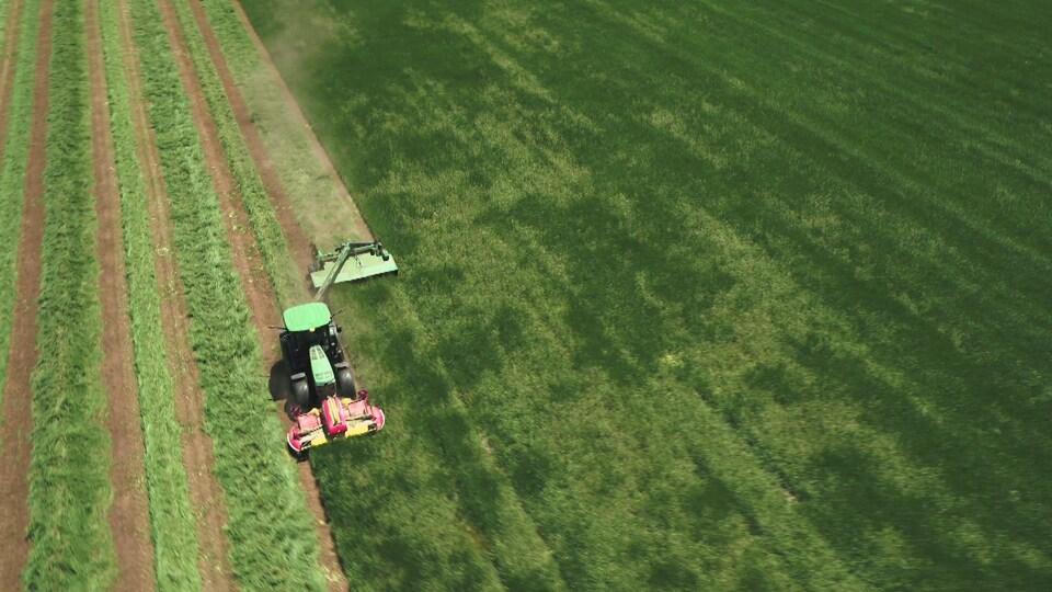 Vue aérienne d'un tracteur muni d'une faucheuse qui coupe le foin dans un champ bien vert.