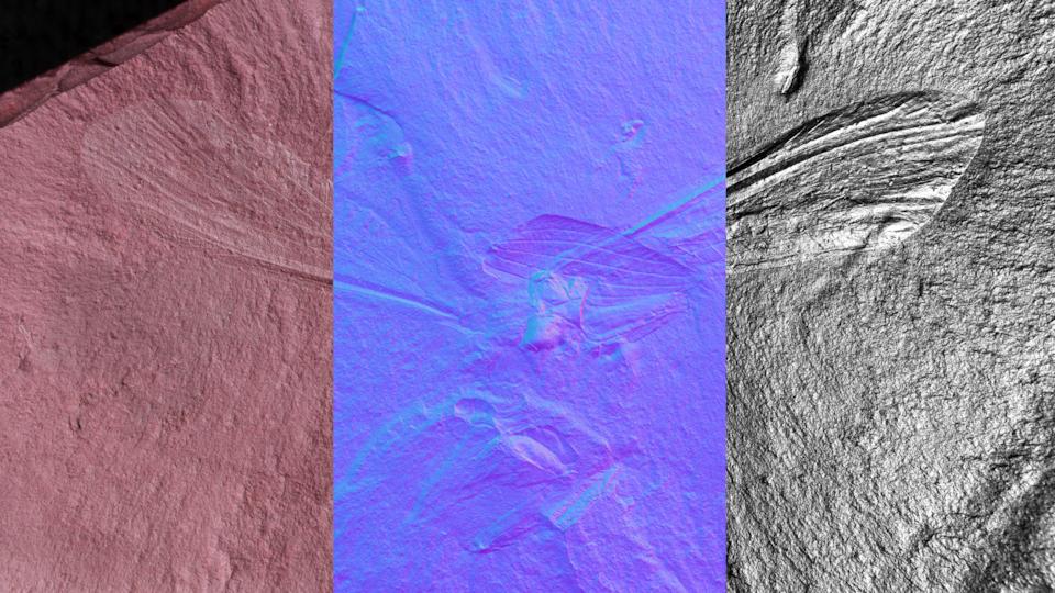 Un fossile sous trois techniques différentes d'imagerie.