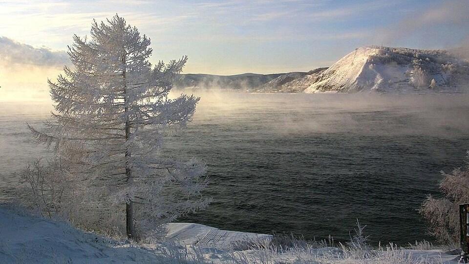 Un arbre gelé sur les rives du lac Baïkal.