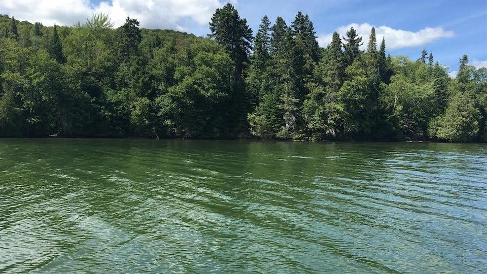 Les cyanobactéries se manifestent sous la forme d'algues bleues qui donnent une couleur verdâtre aux eaux contaminées.
