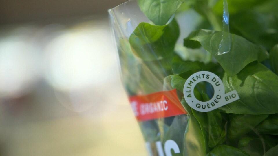 Un plant de basilic dans un emballage de plastique.