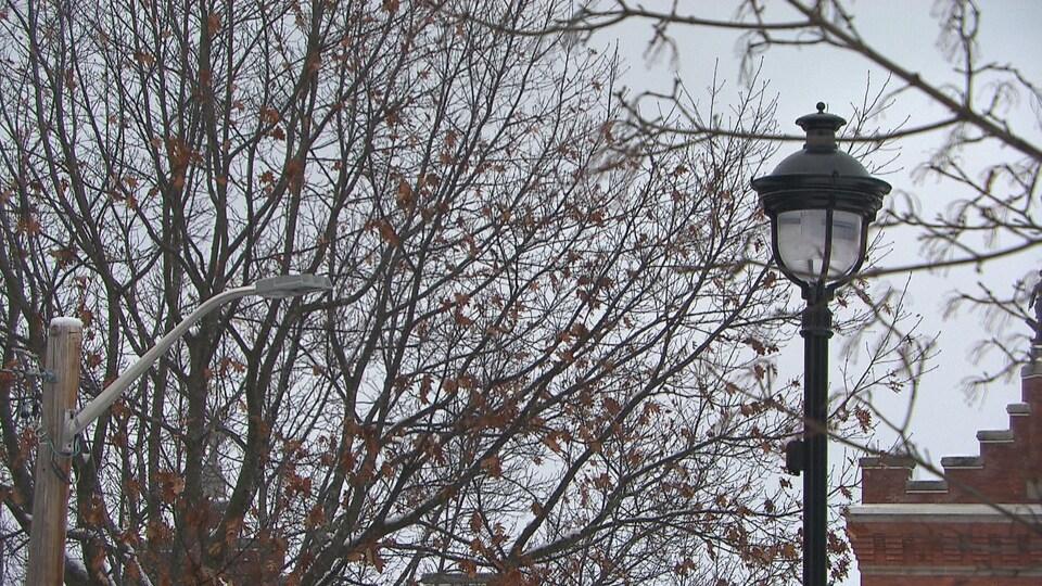 Deux modèles de lampadaires sur la rue de la Cathédrale à Sherbrooke.