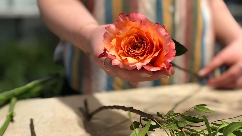 Une main tend une rose.