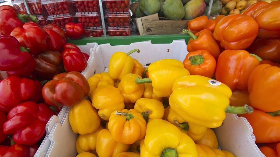 Des poivrons rouges, jaunes et oranges.