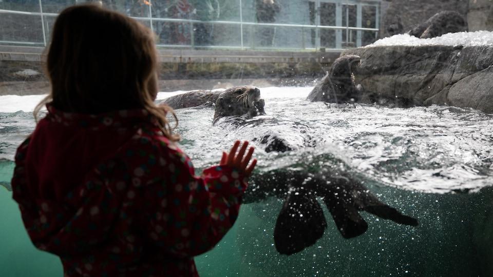 Une petite fille regarde les loutres de mer à l'Aquarium de Vancouver.