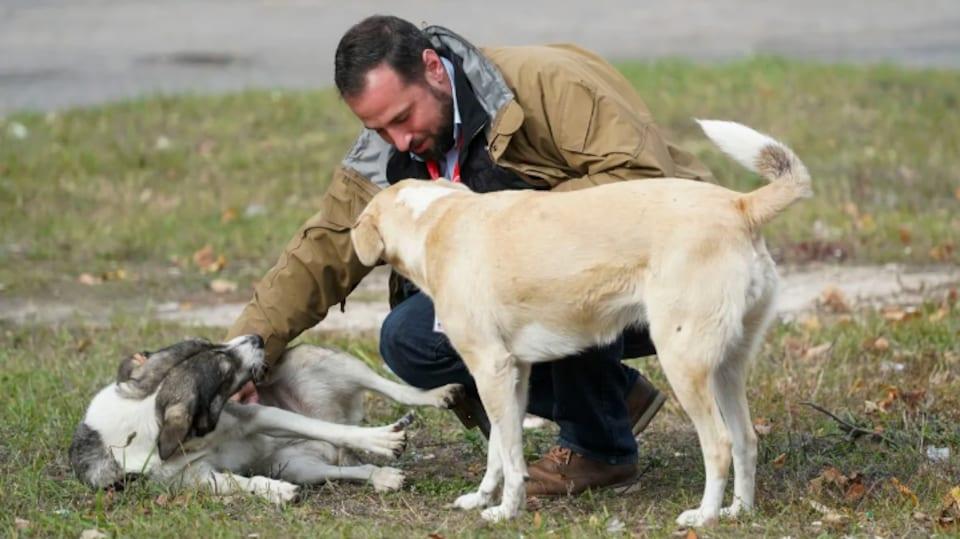 Un homme joue avec des chiens dans l'herbe.