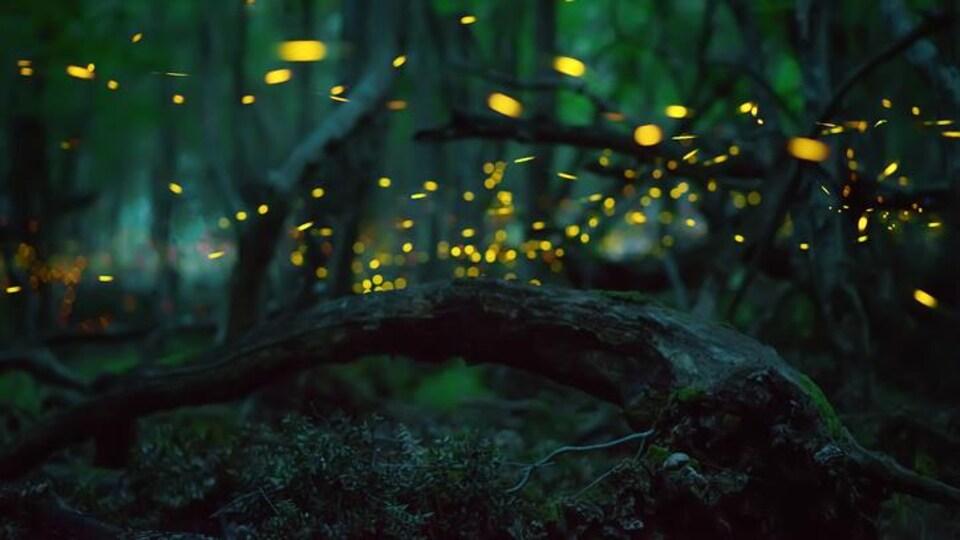 Des points lumineux créés par des lucioles