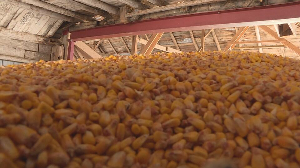 Un silo à grain rempli de maïs