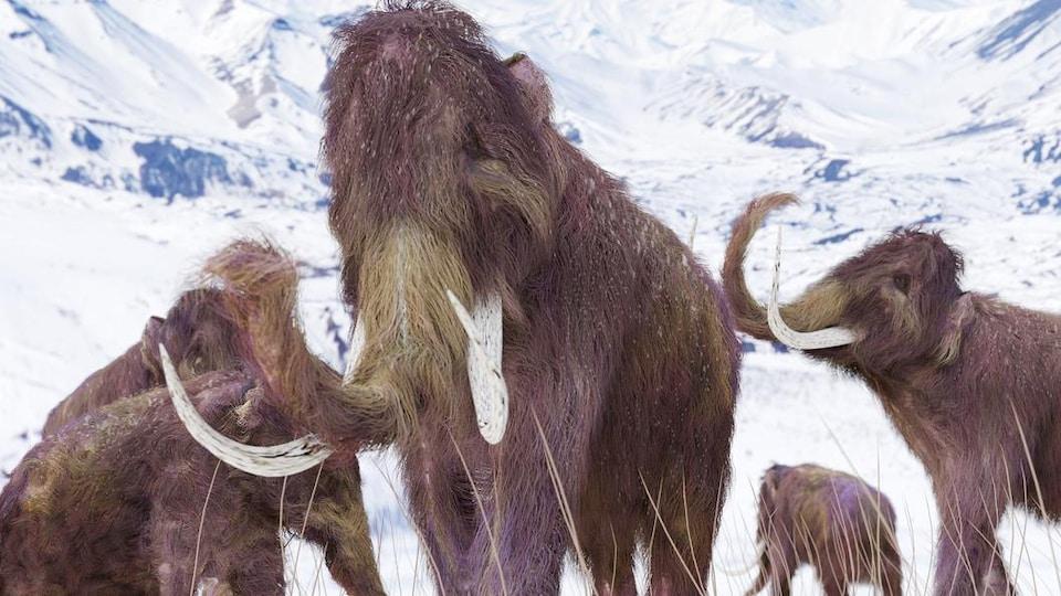 Un groupe de mammouths dans des montagnes enneigées