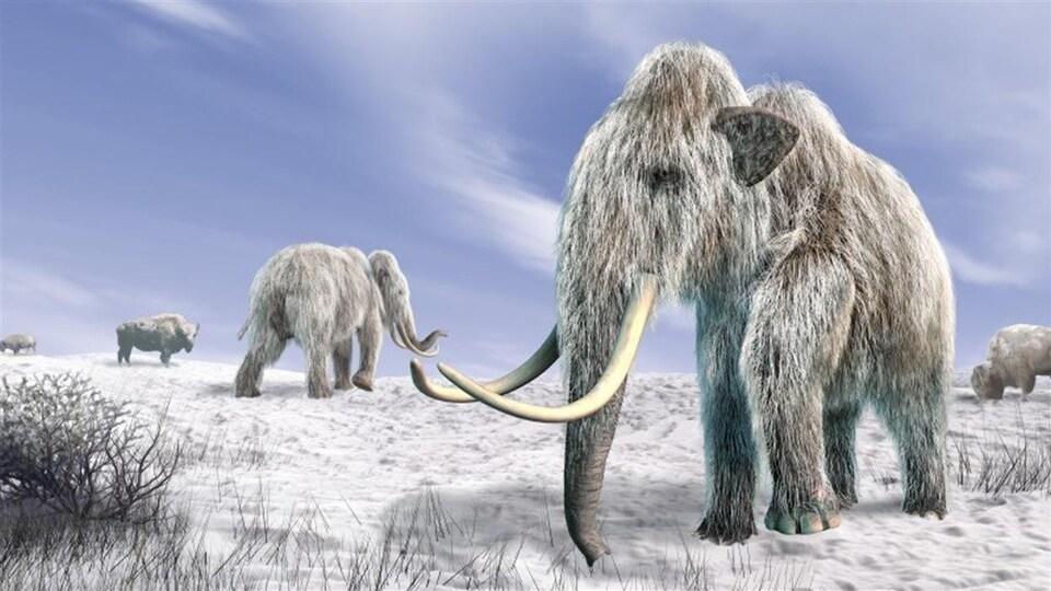 Représentation artistique de mammouths laineux.