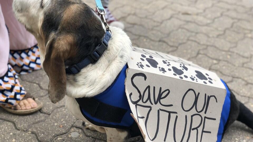 Un chien avec une pancarte.