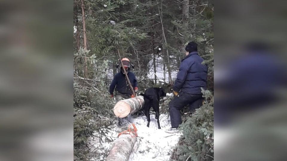 Martin Roy et une femme, accompagnés d'un chien, se tiennent à côté d'un tronc d'arbre qui vient d'être scié dans une forêt, en hiver.