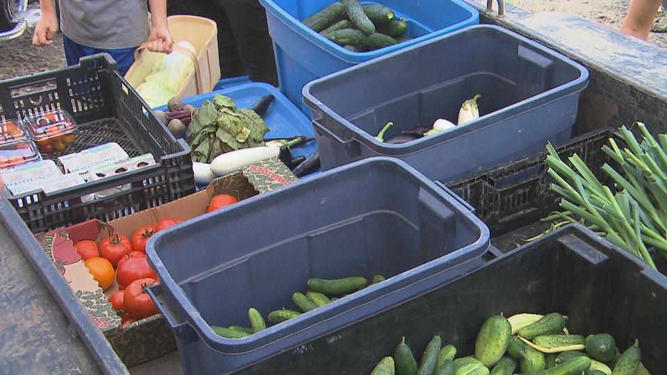 Maski récolte permet à des bénévoles de cueillir des légumes chez des producteurs.