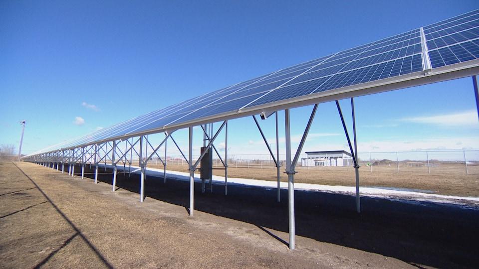 D'immenses panneaux solaires sont montés à même le sol, sur une pelouse jaunie. Il fait soleil.