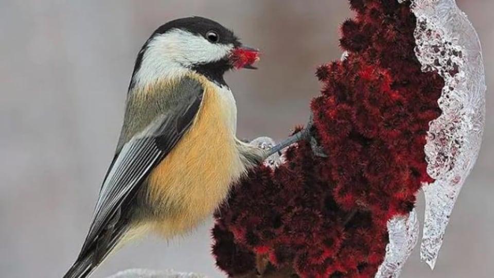 Un oiseau jeune, blanc et noir.