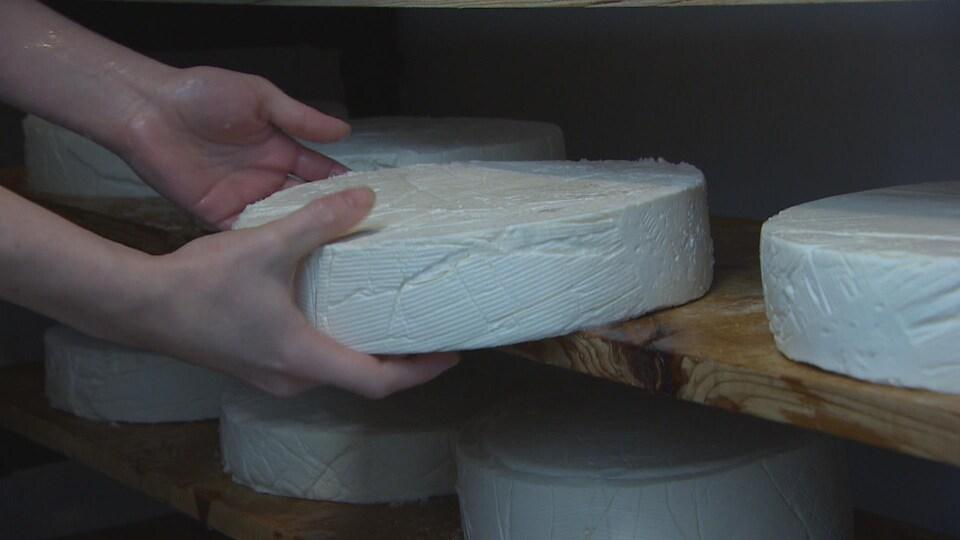 Deux mains retirent une meule de fromage blanc d'une étagère en bois.