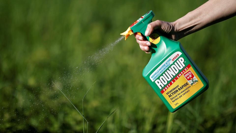 Le désherbant Roundup de Monsanto est utilisé sur de l'herbe.