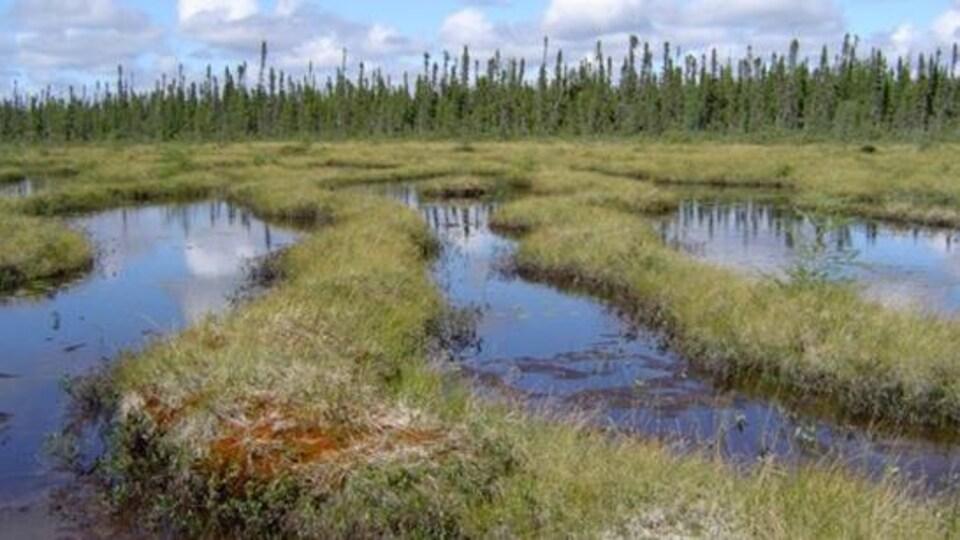 Un milieu humide dans le nord du Québec