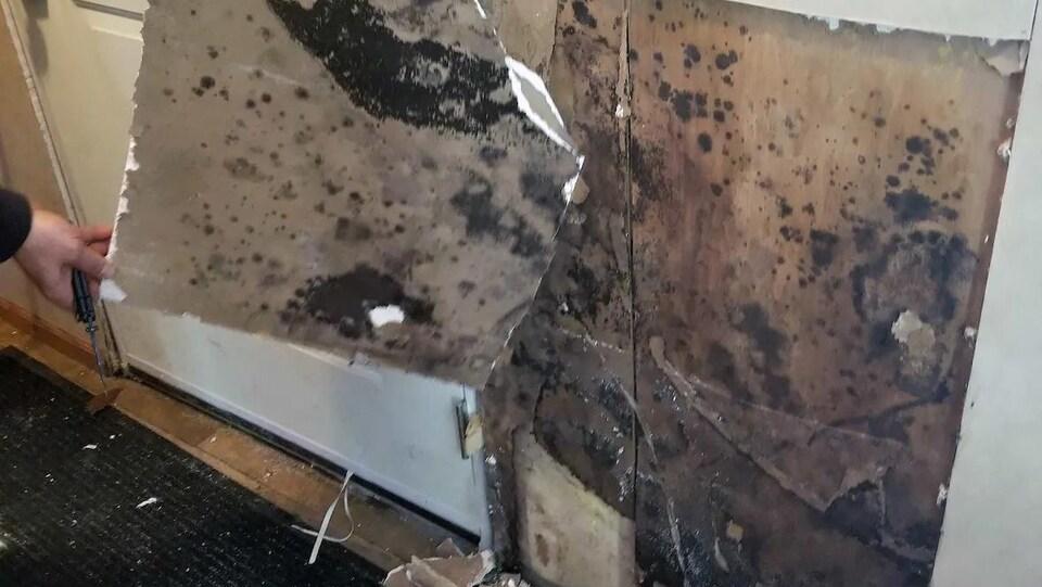 Une partie d'un mur arraché pour montrer les dommages causés par les moisissures.