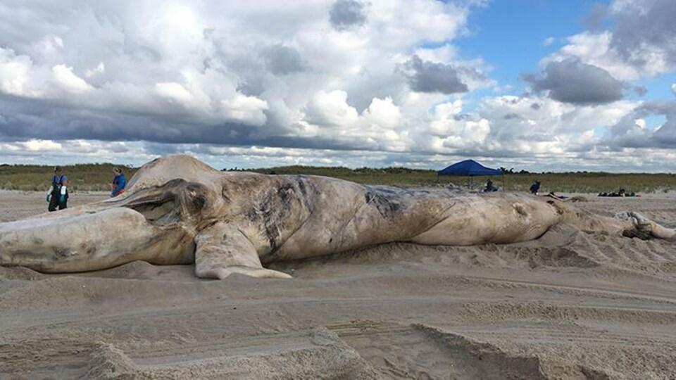Une carcasse de baleine sur la plage et des scientifiques autour.