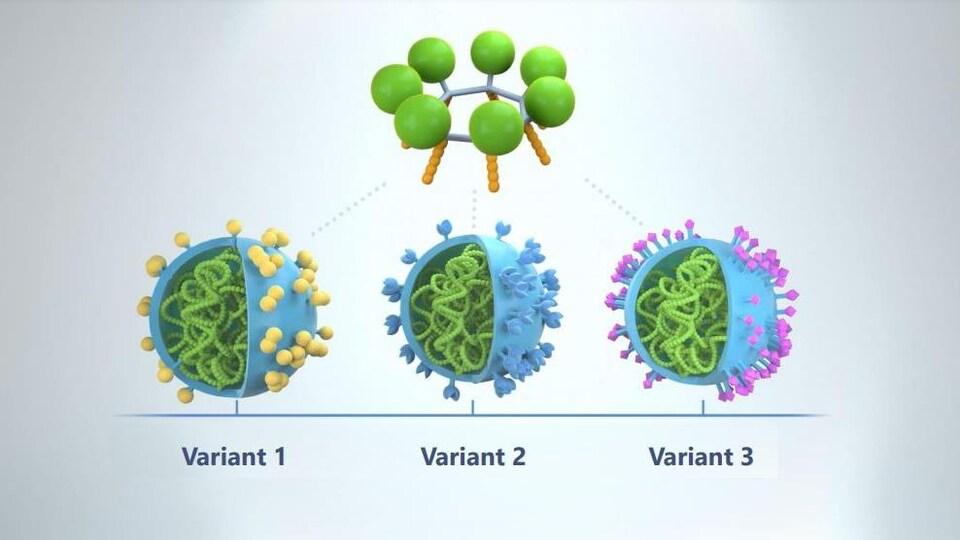Représentation graphique de la nucléocapside au coeur du coronavirus.