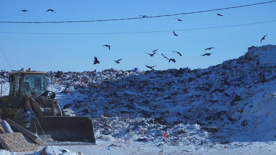 De nombreux corbeaux volent au-dessus d'un grand tas d'ordures où travaille de la machinerie lourde.
