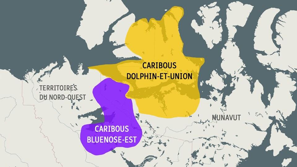 Une carte montrant les aires de répartition des deux hardes de caribous.