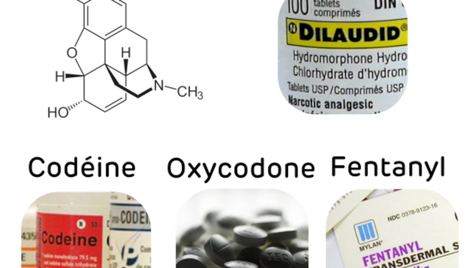 Opioïdes les plus connus : codéine, morphine, oxycodone, fentanyl, hydromorphone