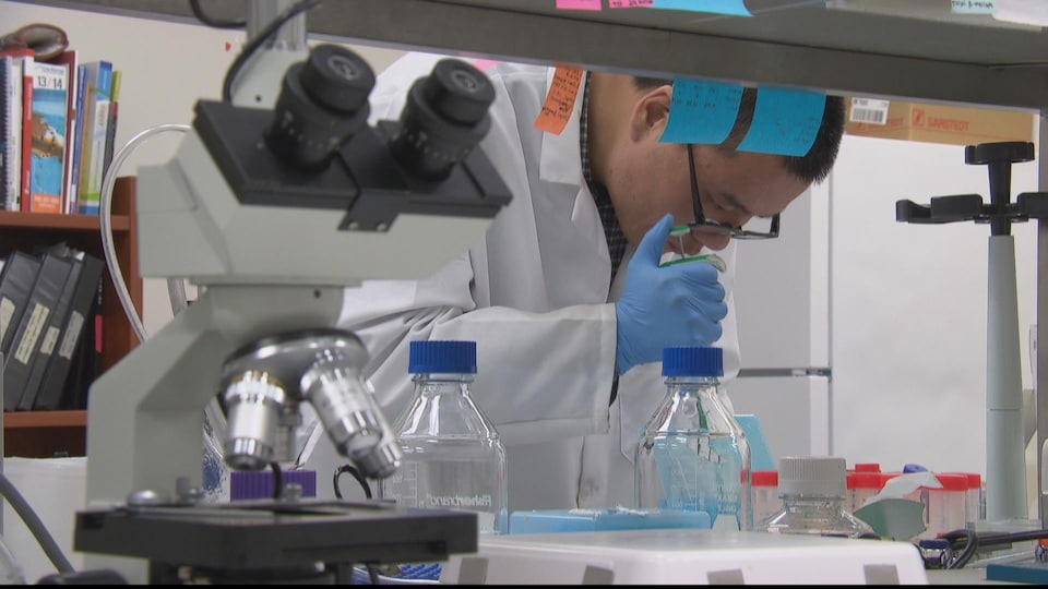 Un employé manipule des échantillons dans un laboratoire médical.