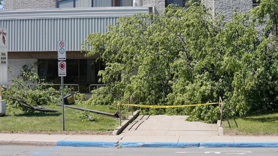 Un arbre devant une entrée et un poteau tombé.