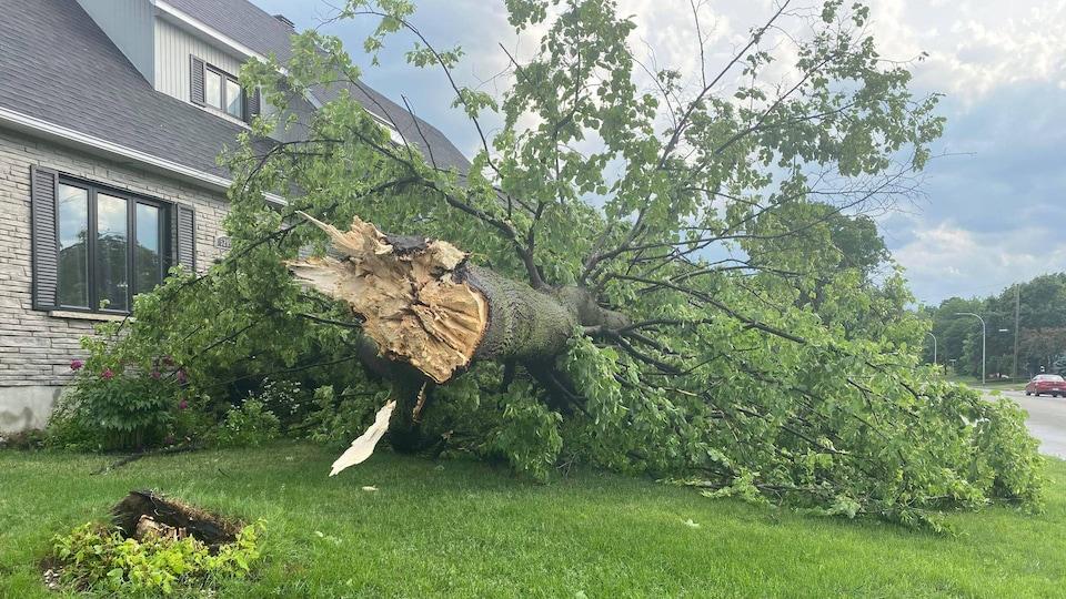 Un arbre tombé sur le terrain avant d'une maison.