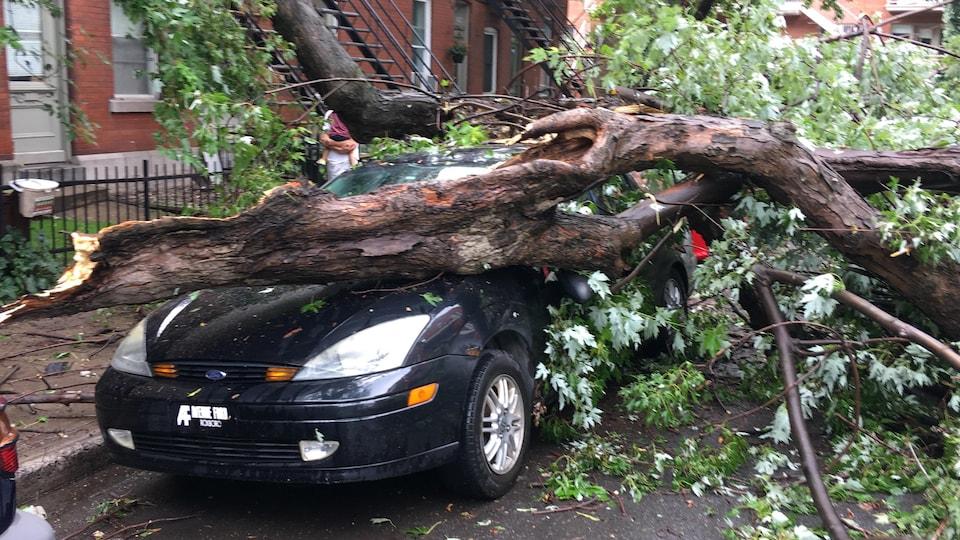 Une branche est tombée sur un véhicule  après avoir cédé sous la pression du vent.