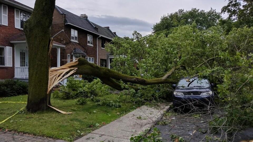 Une rue de l'arrondissement de Côte-des-Neiges–Notre-Dame-de-Grâce jonchée de troncs d'arbres après le passage des orages.