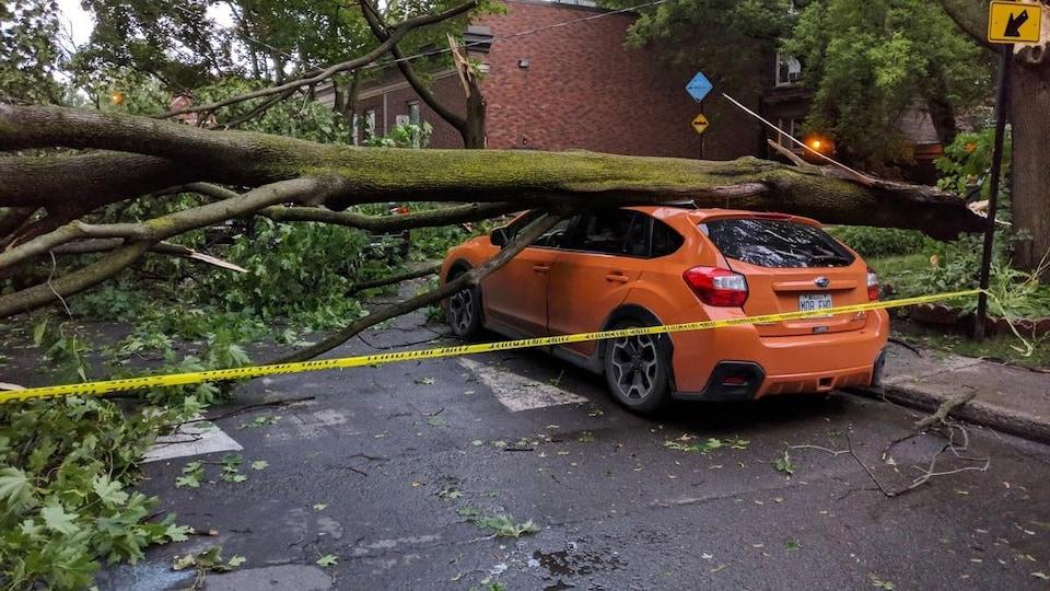 Un grand tronc d'arbre s'écrase sur une voiture dans le quartier de Notre-Dame-de-Grâce