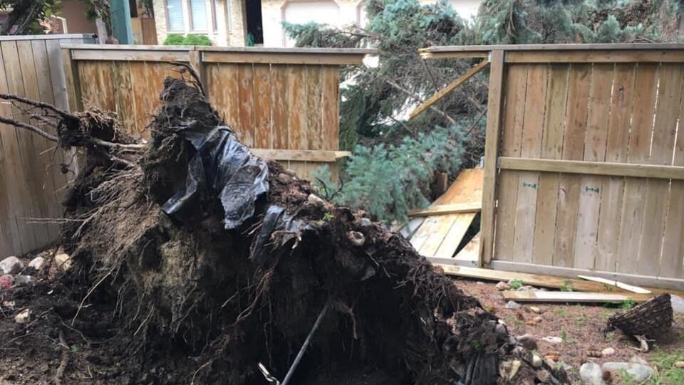 Un arbre déraciné, tombé sur une clôture de jardin.