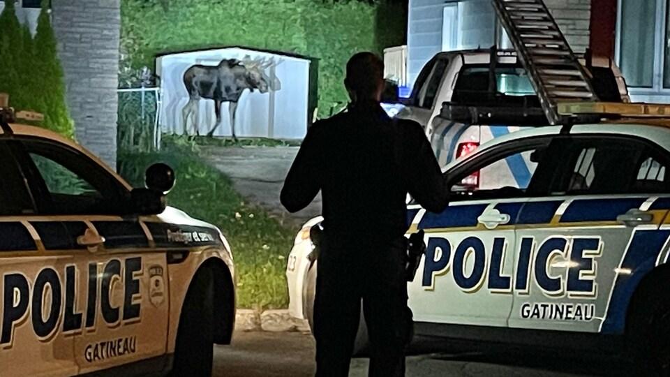 Un policier surveille un orignal.